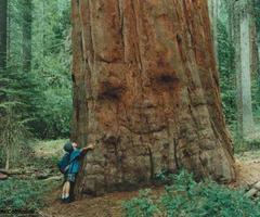 treeumb